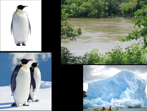 composited photo of penguins on Winnipeg Assiniboine River